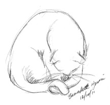 sketch of cat washing tail