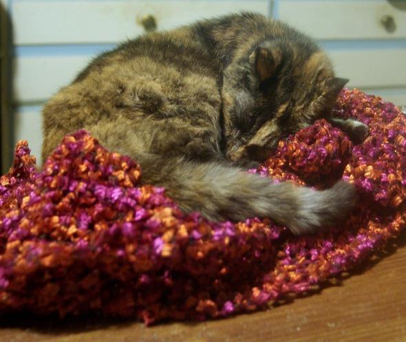 tortoiseshell cat on magenta crocheted shawl