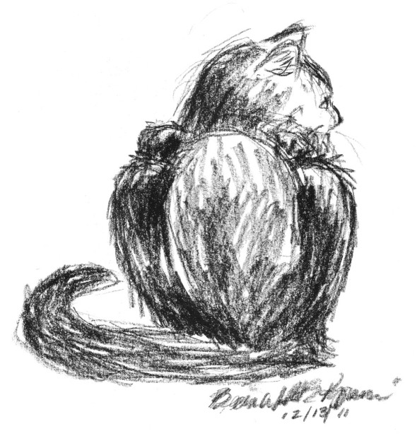 sketch of black cat from the back