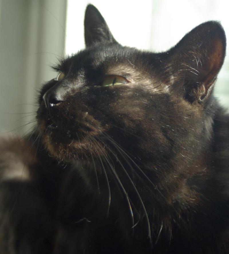 black cat stretching