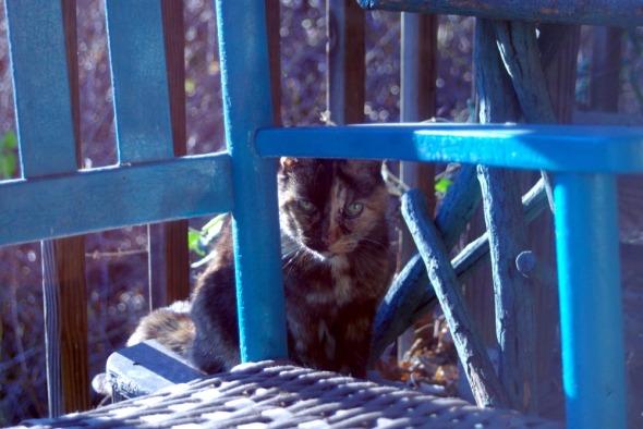 photo of tortoiseshell cat among deck furniture