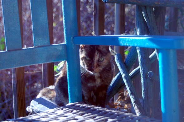 photo of tortoiseshell cat among deck furniture