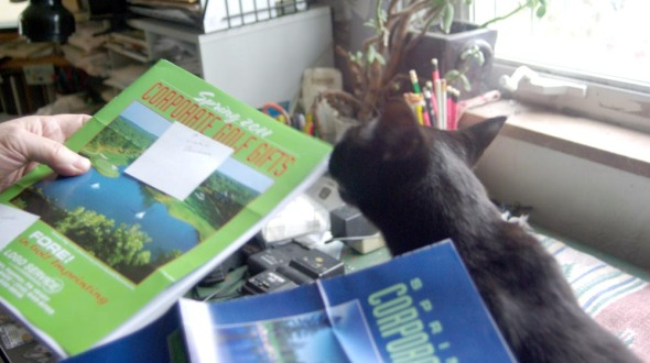 black cat inspecting papers