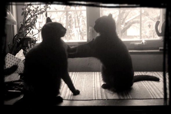 sepia photo of two black cats fighting