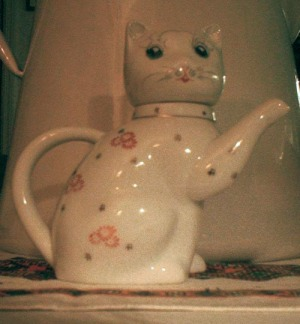 photo of cat pitcher
