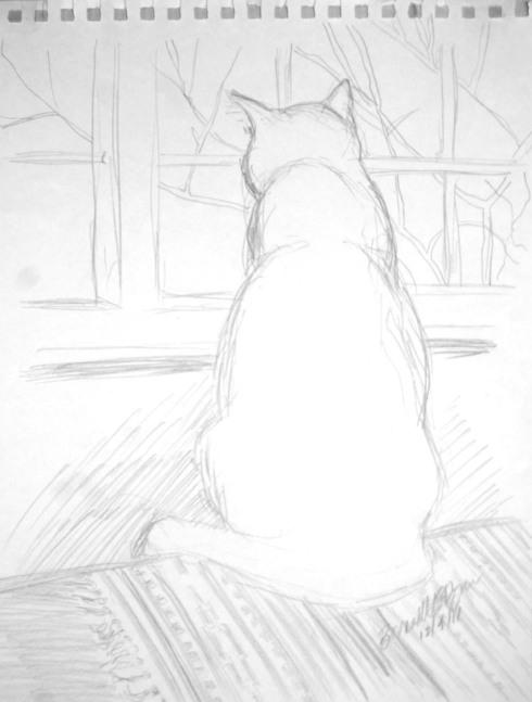 pencil sketch of cat at window