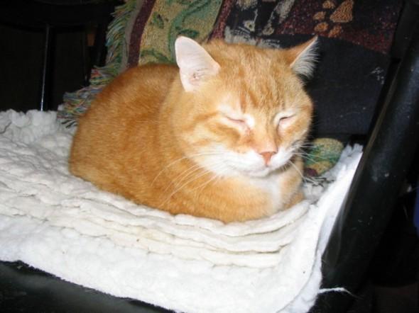 photo of orange cat