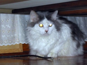photo of long-haired cat under bed