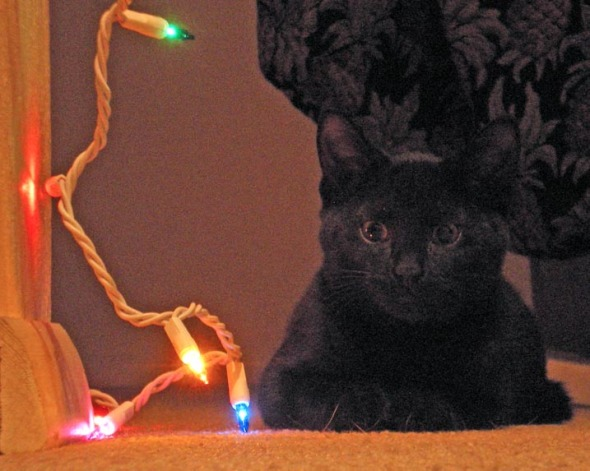 black cat with lights