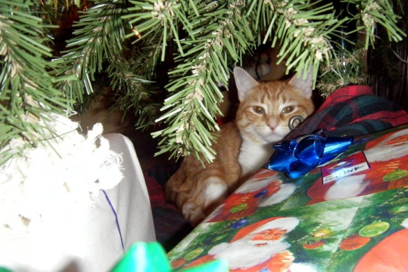 Orange cat under tree