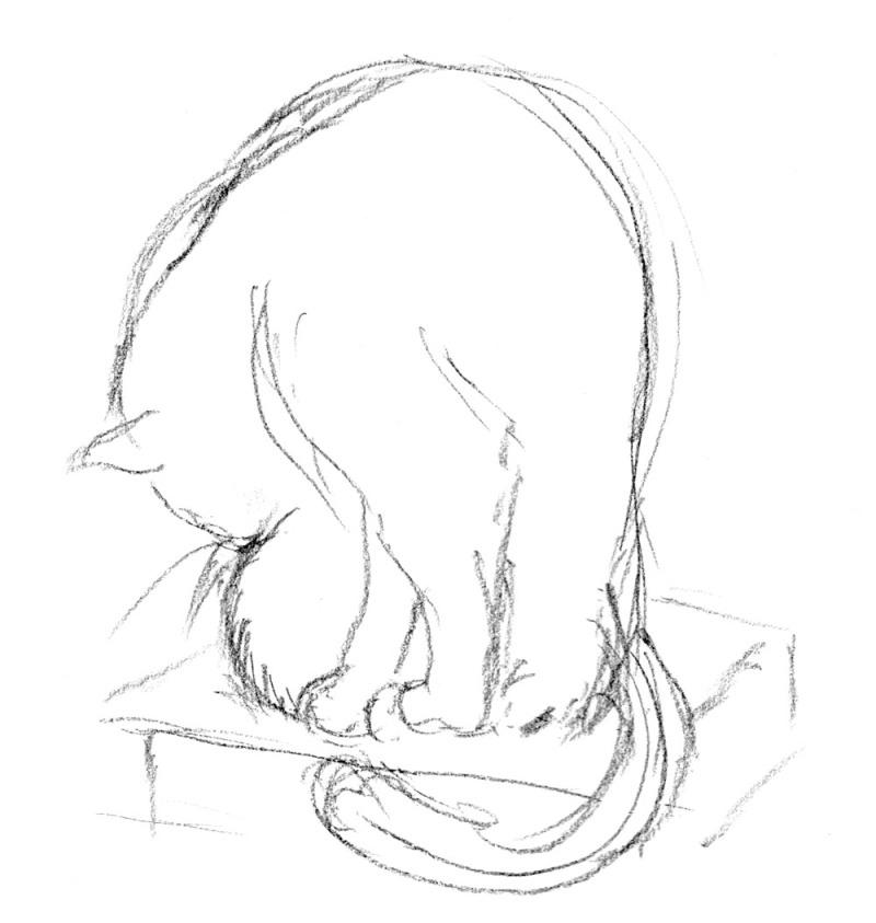cat bathing on books