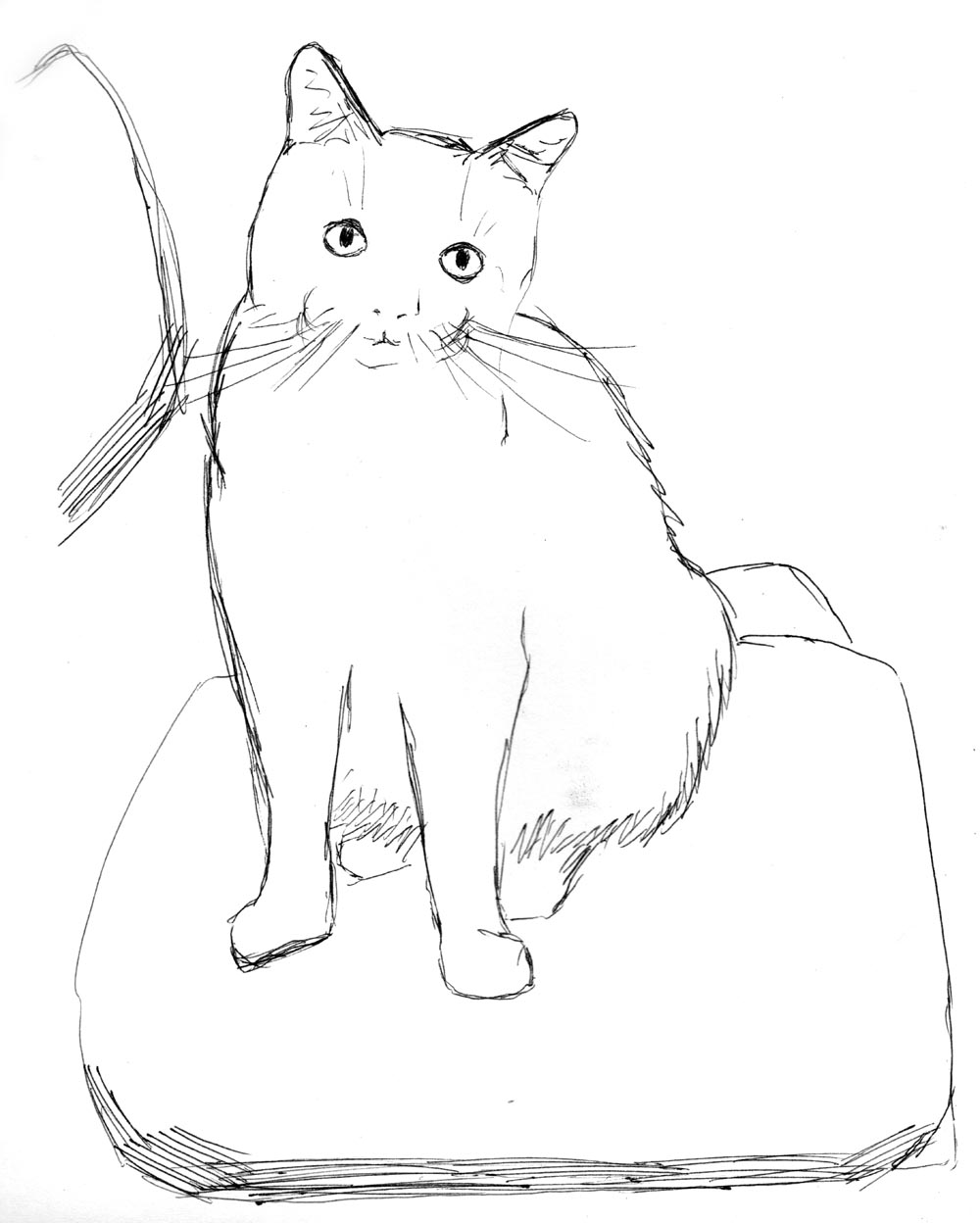 sketch of cat sitting on chair