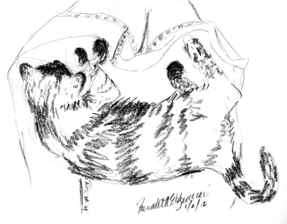 charcoal sketch of cat on lap