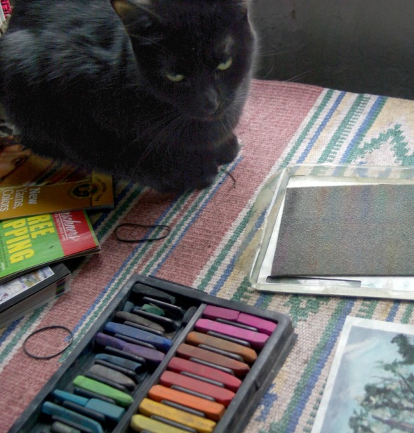 black cat looking at pastels