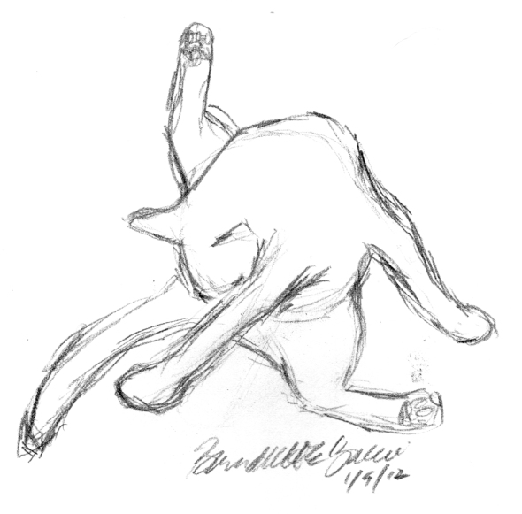 pencil sketch of cat bathing private areas