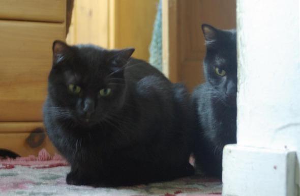 two black cats looking down the steps