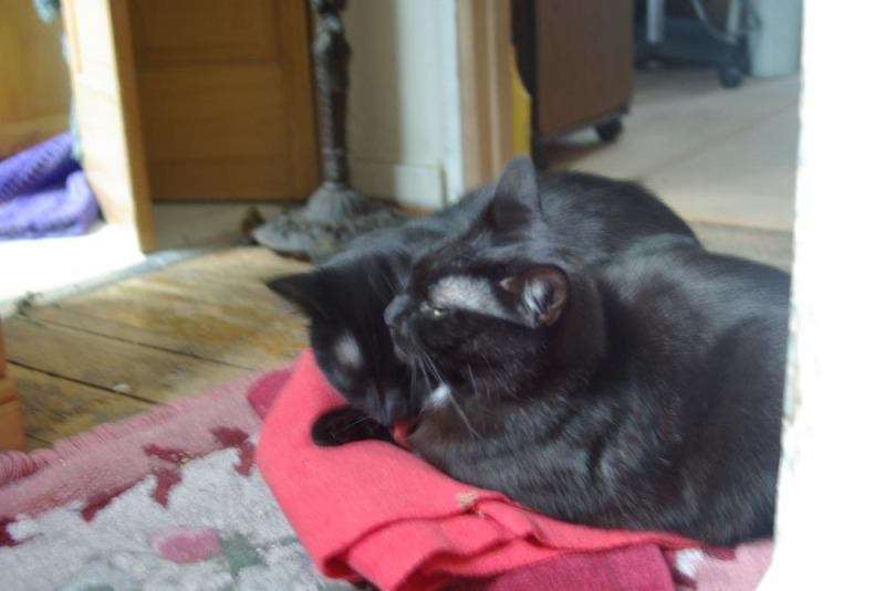 two black cat on red cloth