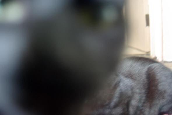 black cat closeup in photo