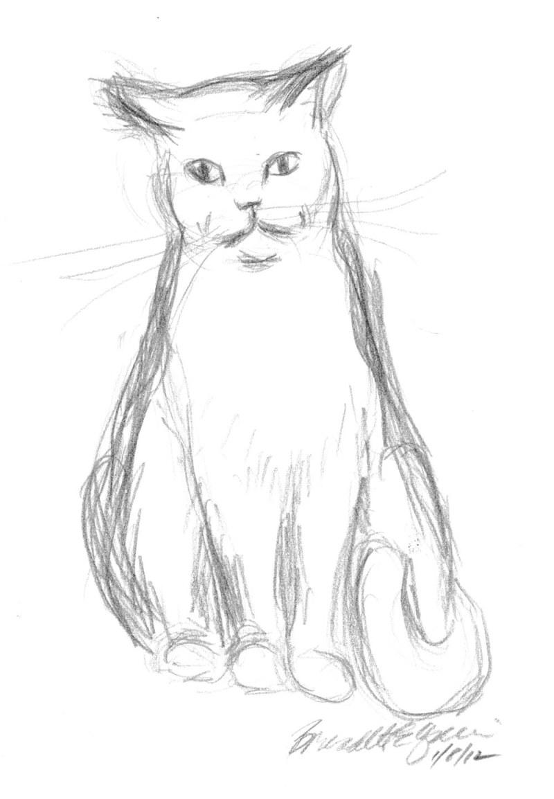 pencil sketch of cat