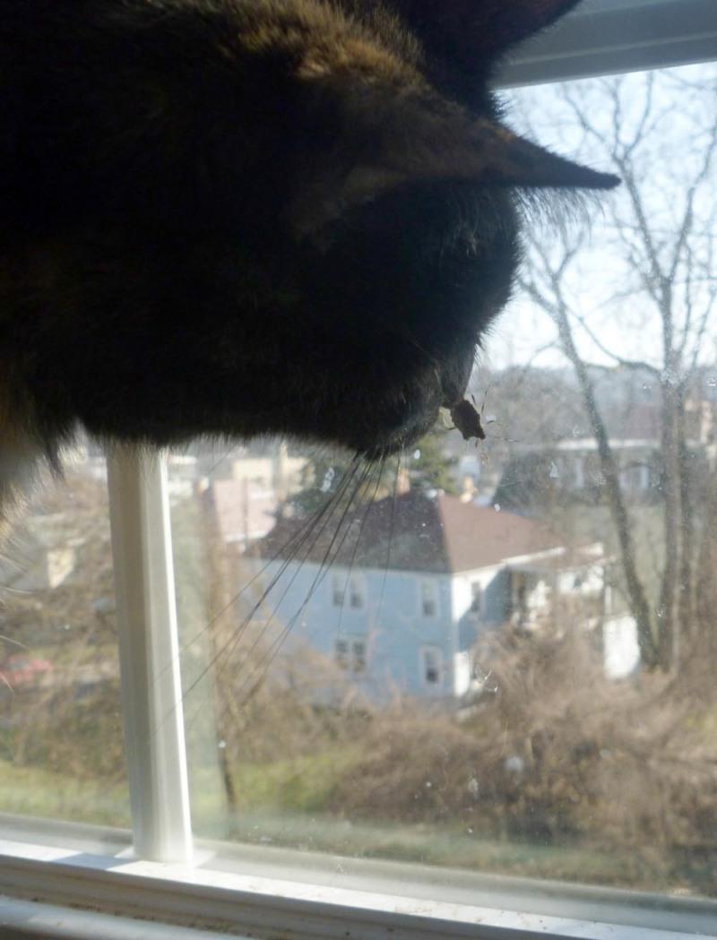 cat at window with stinkbug