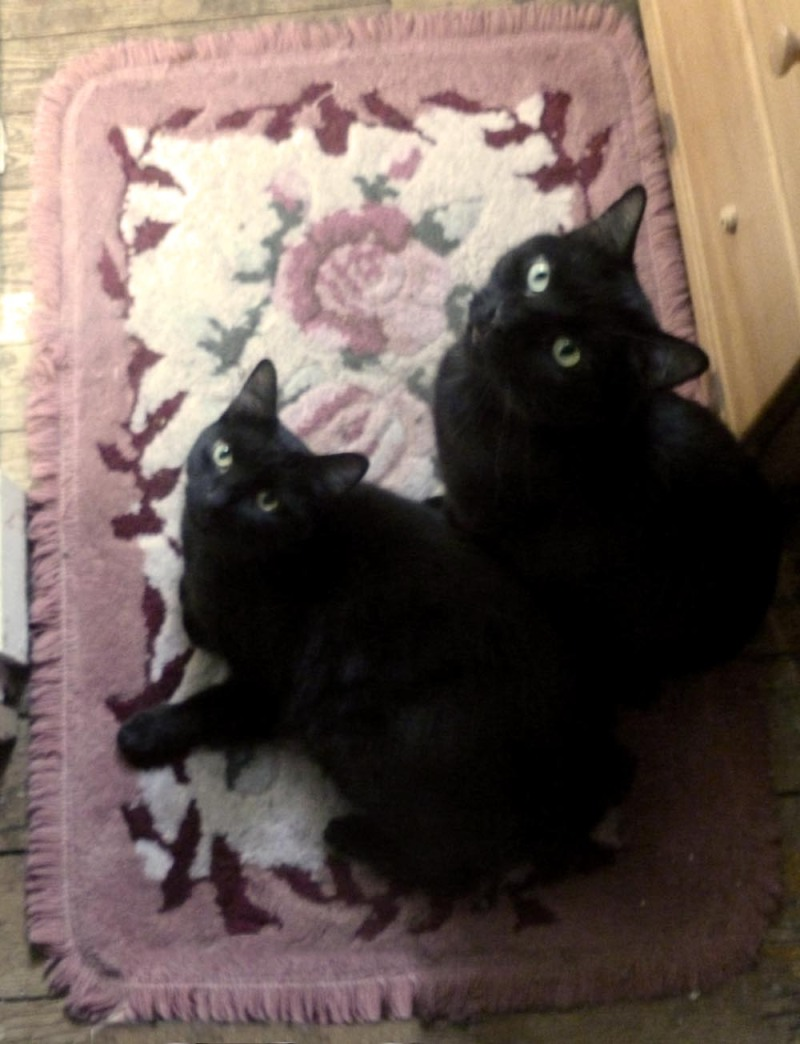 two black cats on flowered rug