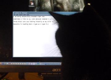cat looking at computer