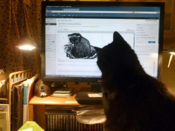 black cat looking at computer screen