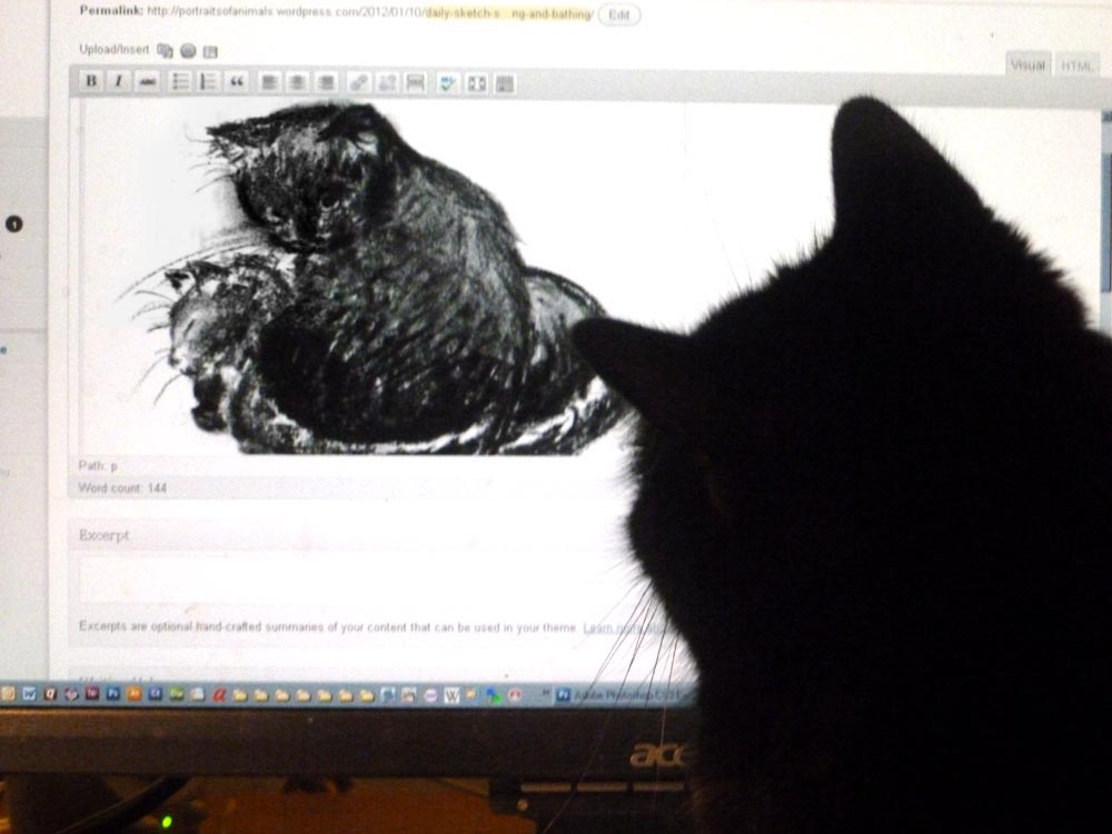 black cat looking at sketch on computer