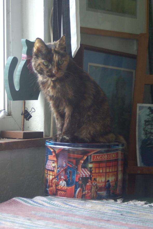 tortoiseshell cat on cookie tin