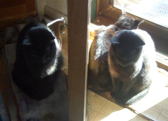 black cats by door in sun