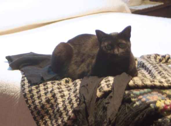 black cat on clothes on bed