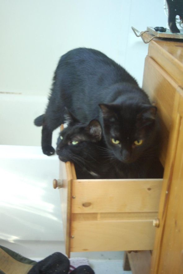 two black cats in drawer