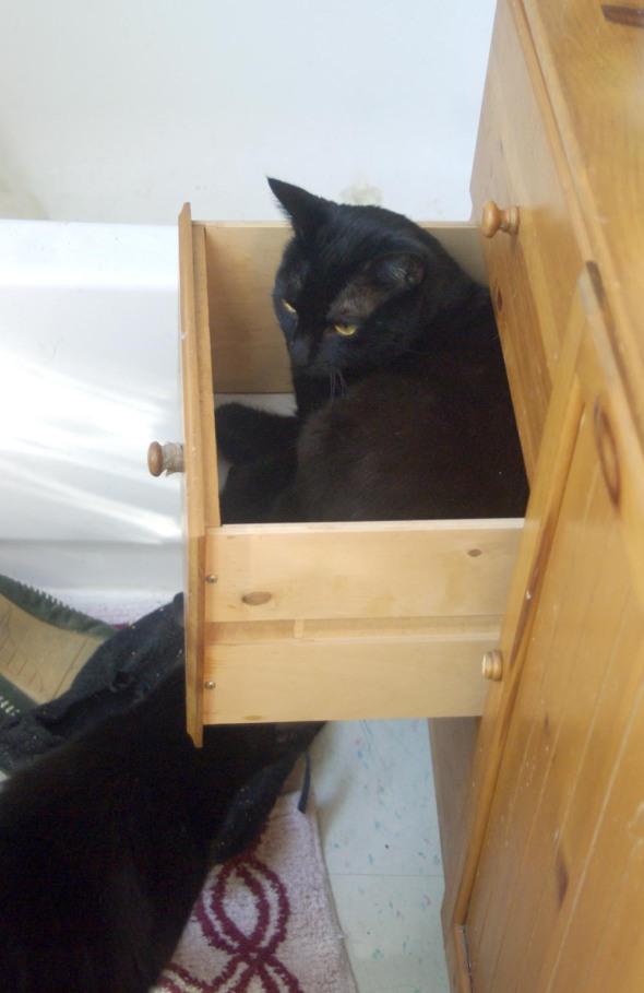 black cat in drawer