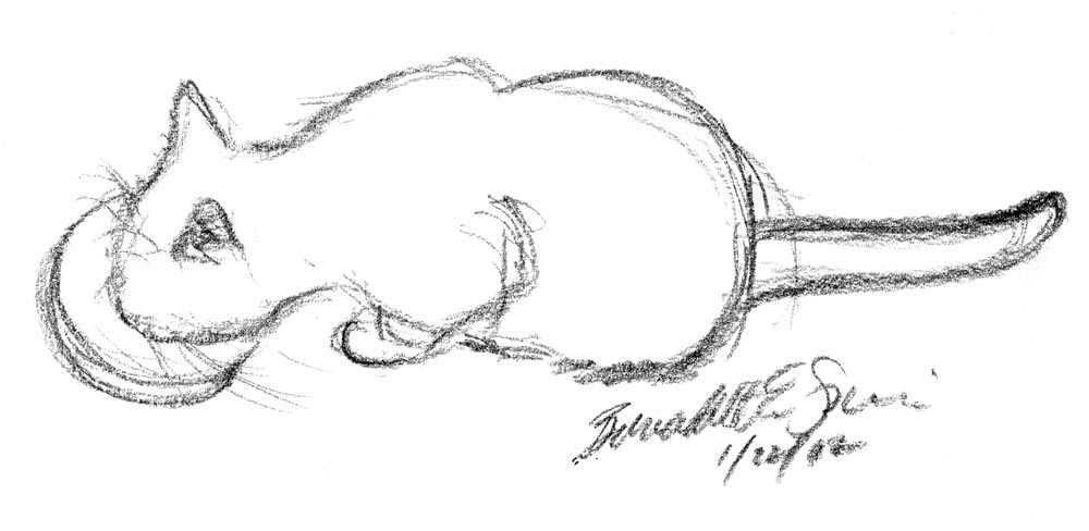 charcoal sketch of cat eating