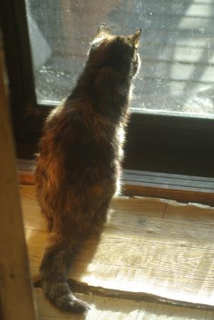 cat sitting by back door