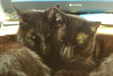 two black cats hugging