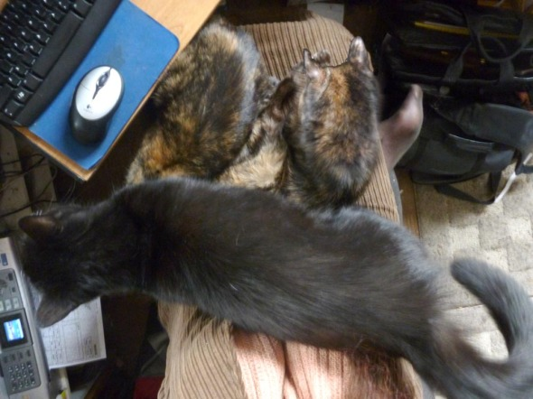 black cats and two tortoiseshell cats