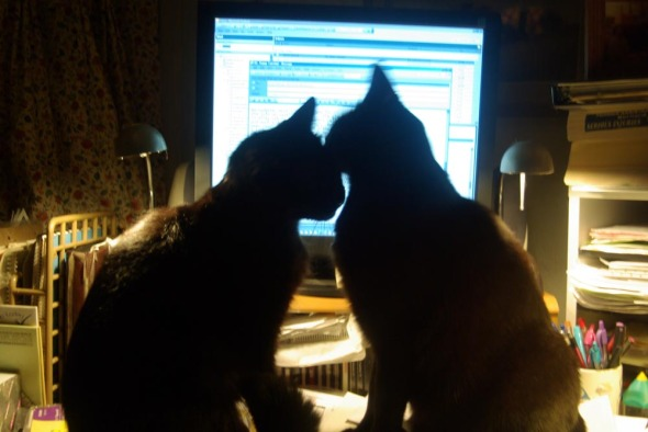 two cats washing faces in front of computer