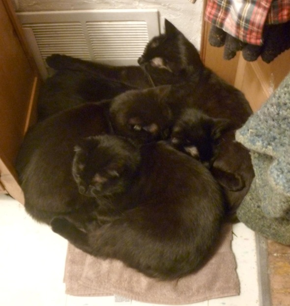 four black cats in a pile