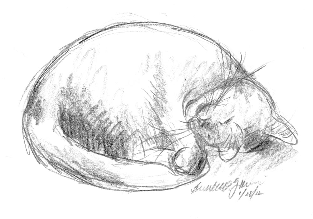 pencil sketch of cat sleeping