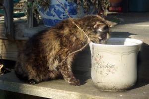 cat looking into flower pot