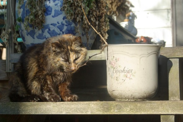tortie cat with twig