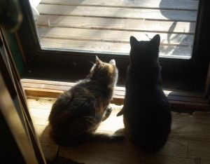 two cats at door