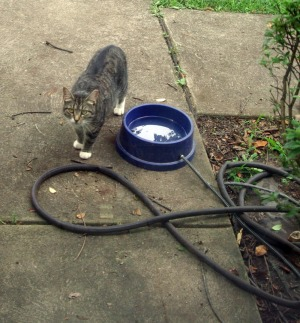 outdoor heated water bowl for feral cats and wildlife
