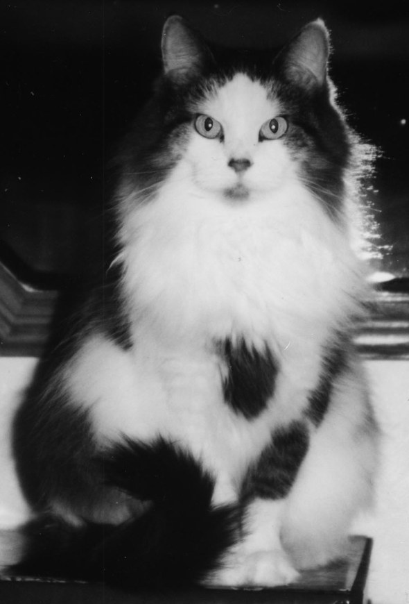 black and white photo of long-haired cat