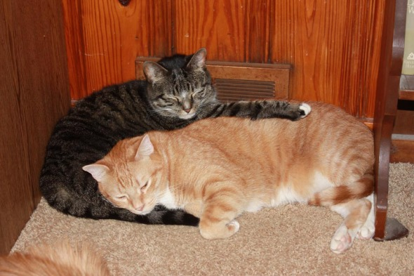 two cats curled together