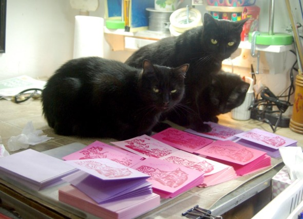 three black cats with printed cards