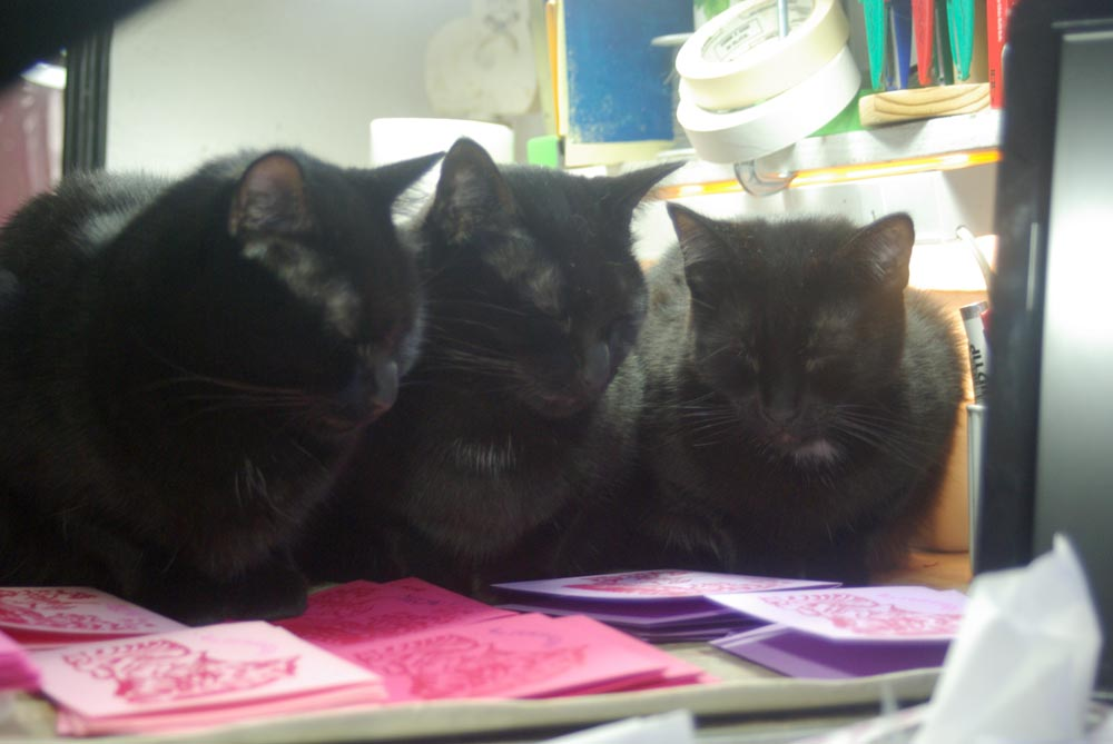 three black cats looking at cards