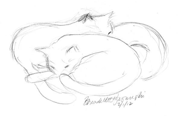 pencil sketch of cats sleeping
