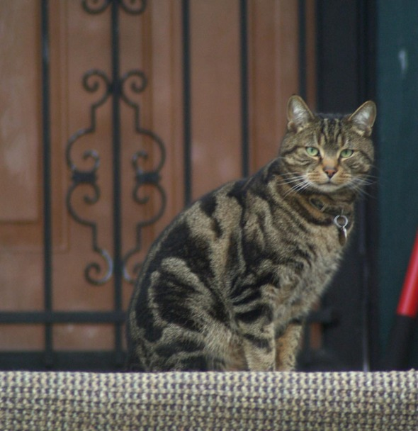 tabby cat on porch